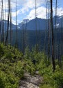Chalet Loop Trail burned out section