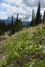Glacier Lilies Chalet Loop