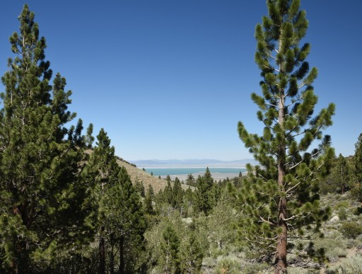 View of Mono Lake from Parker Lake Trail