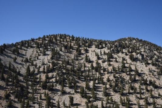 dolomite-hillside