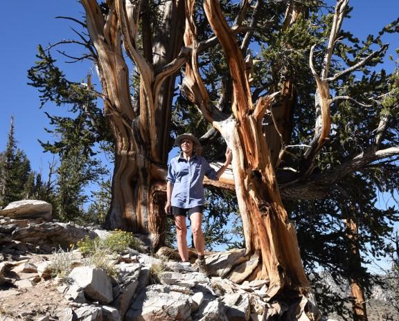 lynn-with-bristlecone-pine