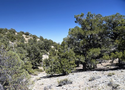 pinyon-pine-juniper-woodland