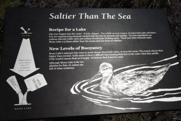 salteir-than-sea