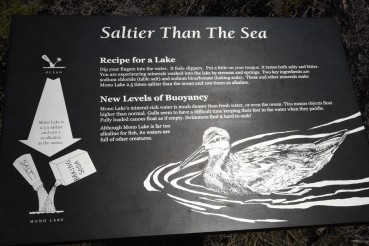 salteir-than-sea