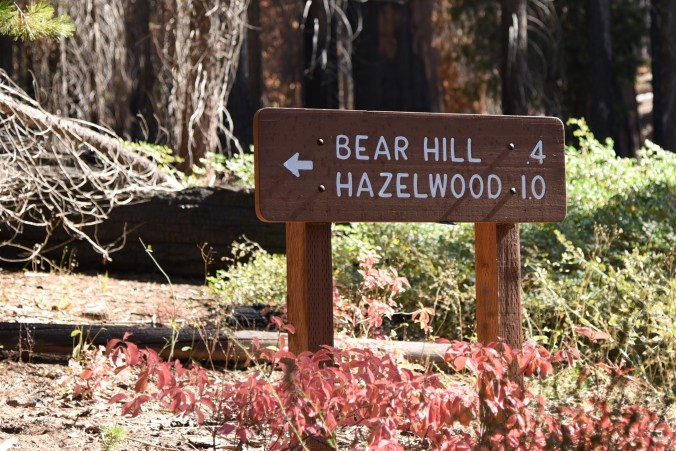 bear-hill-sign