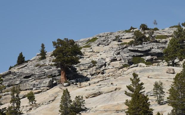 hillside-of-granite-opposite-olmstead-point