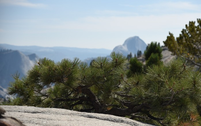 pine-on-olmstead-point