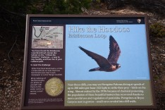 bristlecone-loop-trail-interpretive-sign