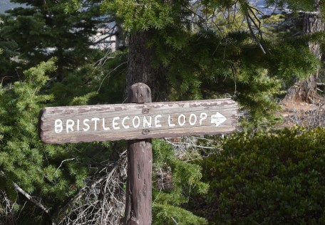 bristlecone-loop-trail-sign