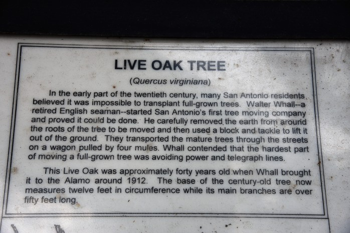 live-oak-sign-at-alamo