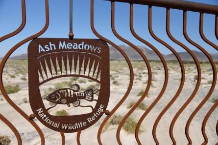 ash-meadows-2