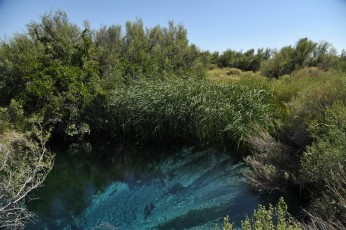 A warm spring at Ash Meadows! It really was that color!