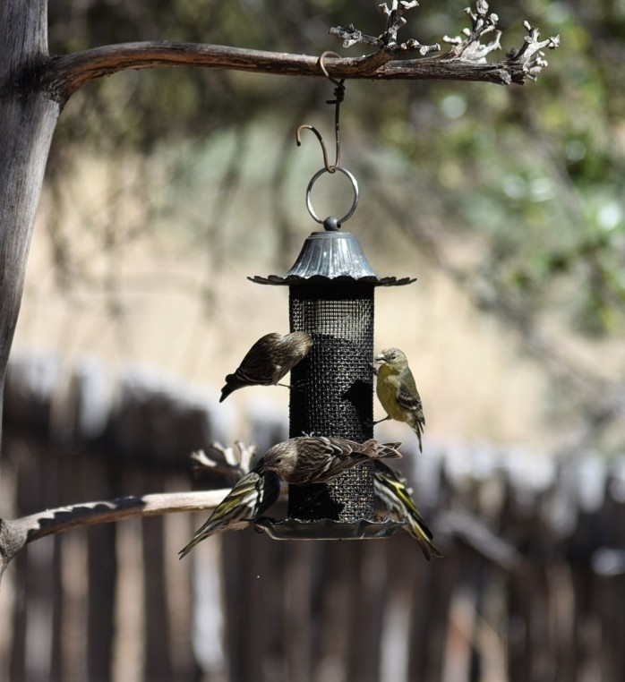 birds-at-feeder