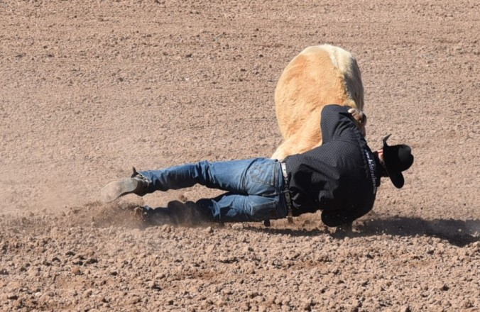 calf-wrestling-1