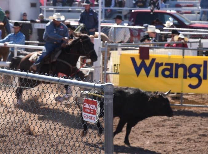 calf-wrestling-2