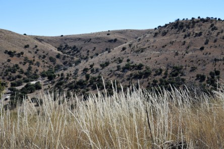 grasses-at-dmsp