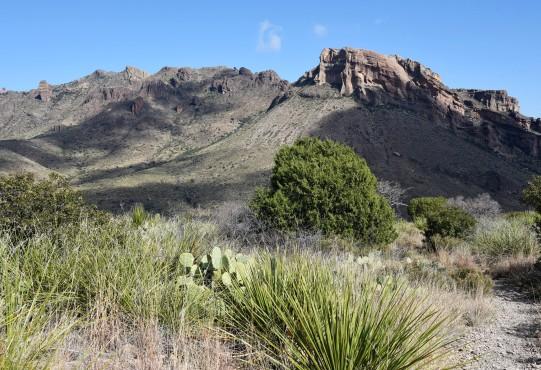 pine-canyon-1