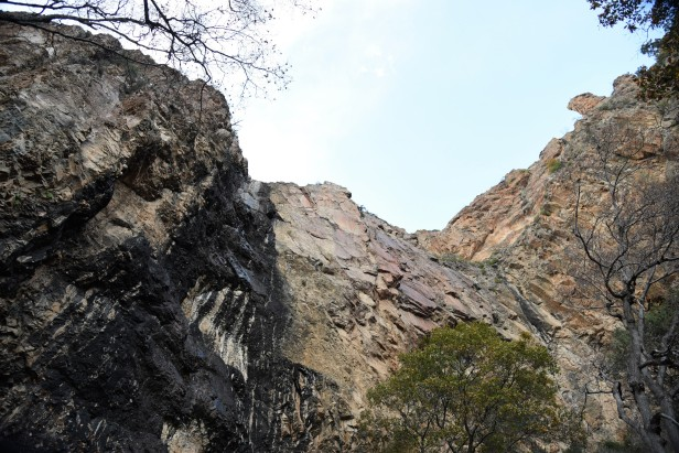 pine-canyon-5