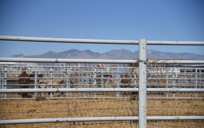 tucson-rodeo-3