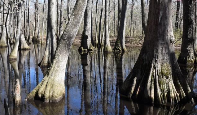 cypress-swamp-3