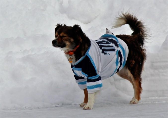 dans-hockey-dog
