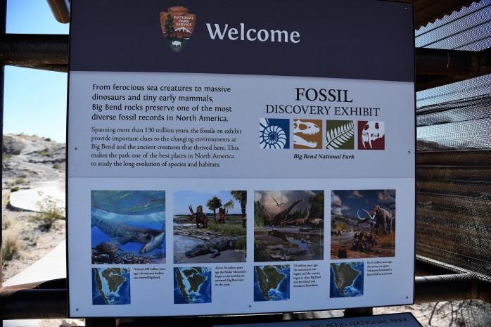 Fossil Exhibit 3