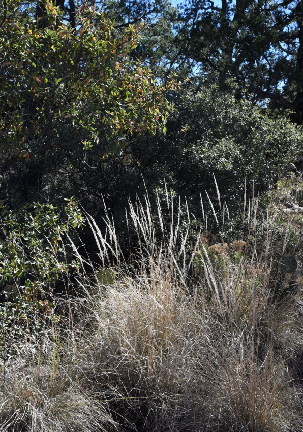 Trail vegetation Lost Mine Trail