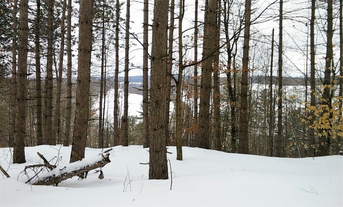 Top of the hill view - on my snowshoe route!