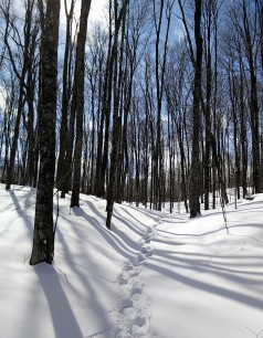 My snowshoe woods!