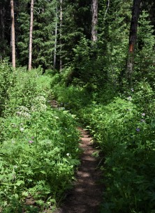 West side of Two Oceans Lake trail - the mosquitoes were brutal!