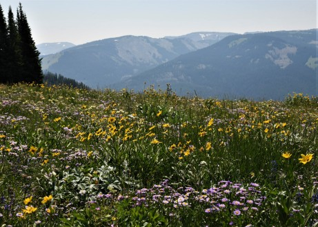abundance of wildflower meadows throughout the hike!