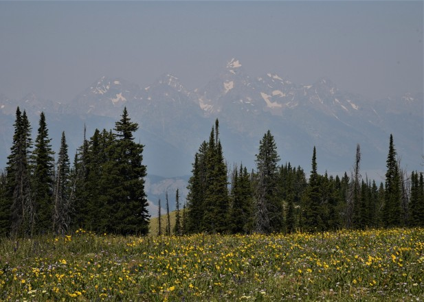 View of Tetons from trail