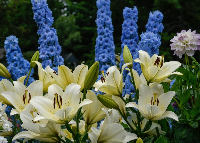 Lilies and Delphinium (1 of 1)