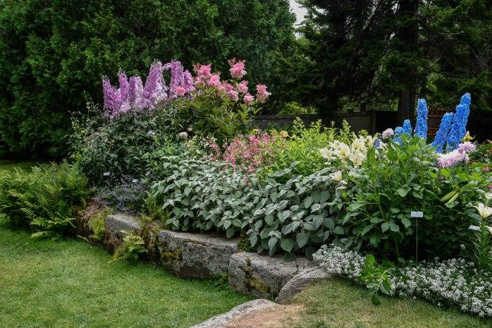 Perennial border plants (1 of 1)