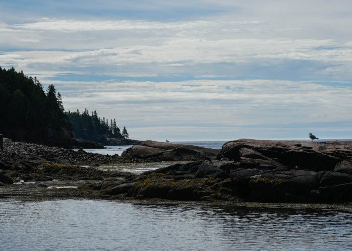 Gulls in Otter Cove (1 of 1)