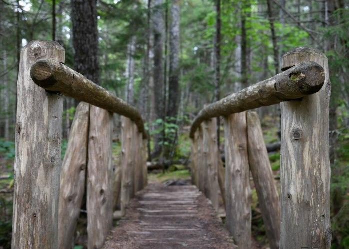 Log bridge Hunter Cove Trail (1 of 1)