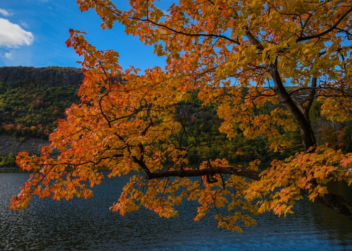 Jordan Pond foliage 4 (1 of 1)