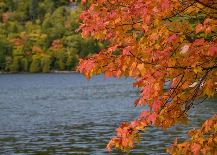 Maple on Jordan Pond (1 of 1)
