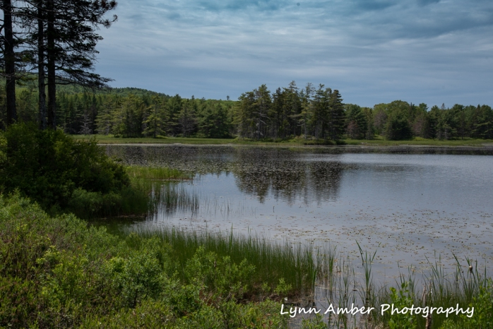 Aunt Betty's Pond (1 of 1)