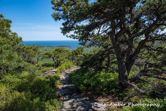 South Ridge Dorr Mountain trail (1 of 1)