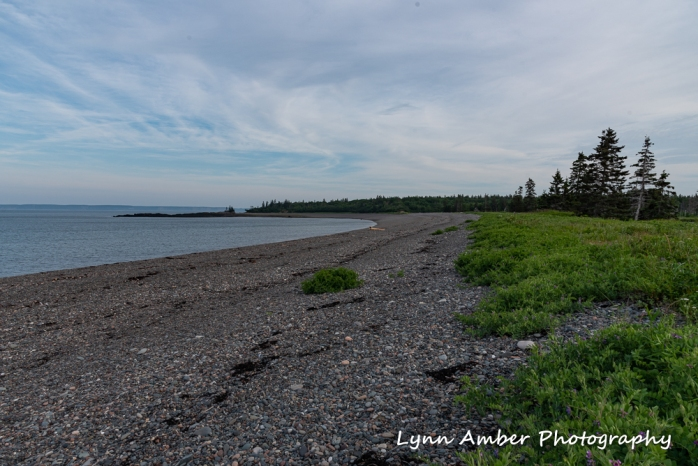 West Quoddy and Herring Cove (10 of 11)
