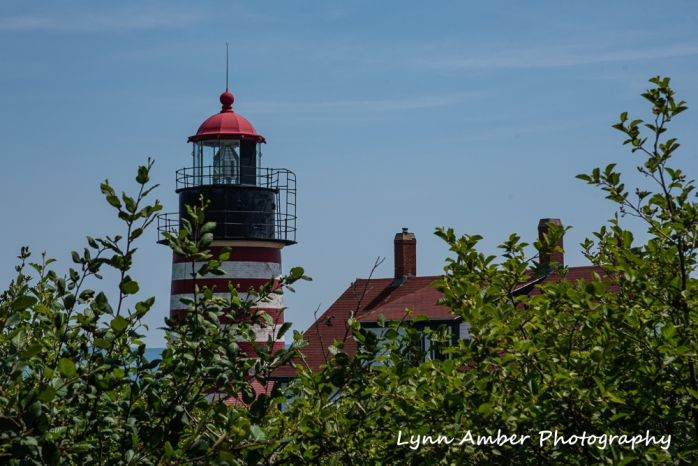 West Quoddy and Herring Cove (3 of 11)