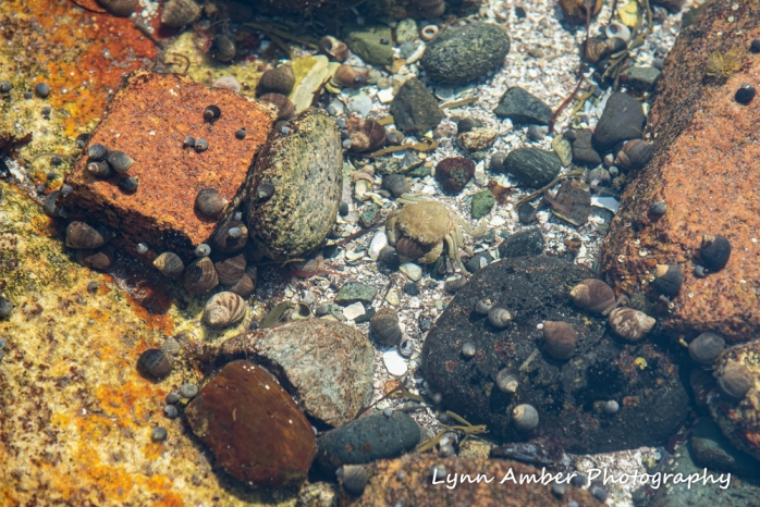 Tide Pools (3 of 4)
