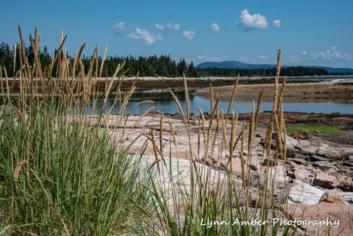 Tide Pools (4 of 4)