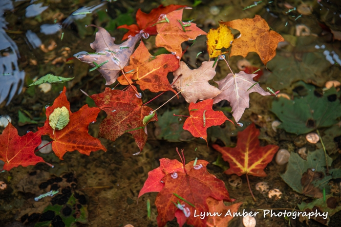 #2 Fall Color (1 of 1)