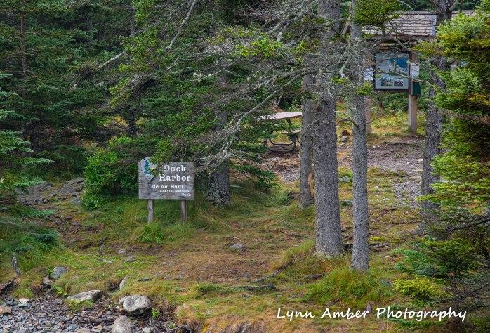 Isle au Haut Hike Day 3-1.jpg