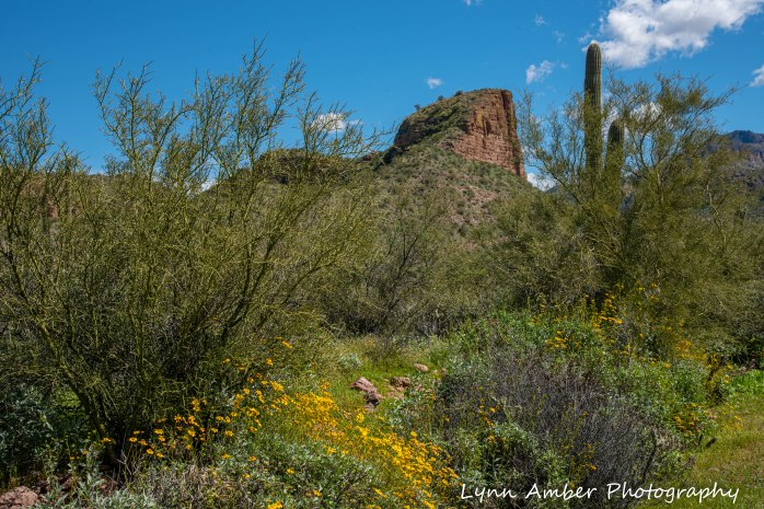Assorted photos Tonto NF (6 of 13)