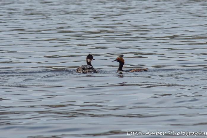 Canyone Lake Canoe (2 of 13)