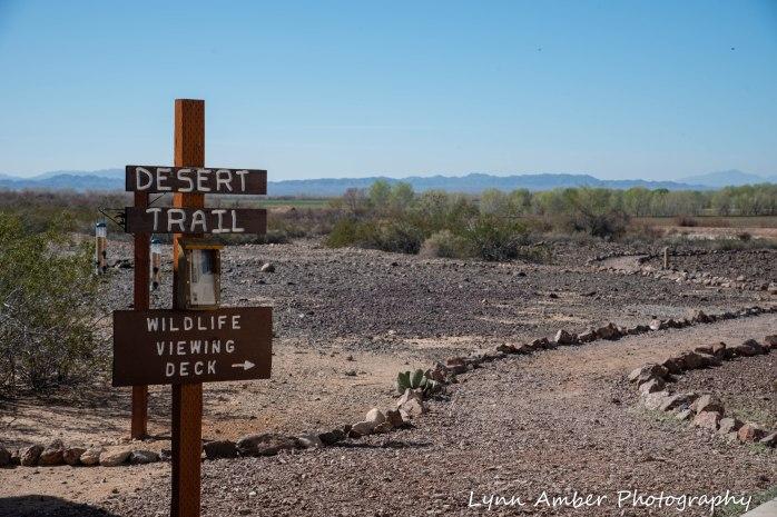 Cibola National Wildlife Refuge Desert Trail 2