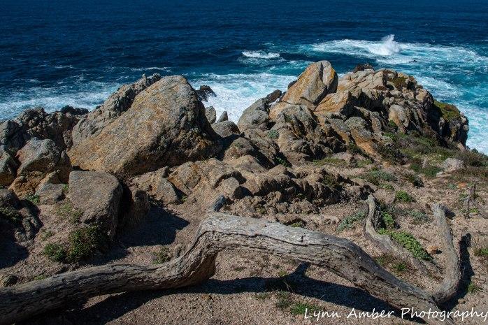 Point Lobos SNR (1 of 43)